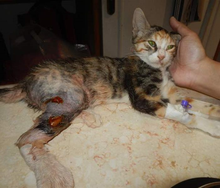 Another sad case from the SUST Animal Orphan Hospital in Hurghada, Egypt