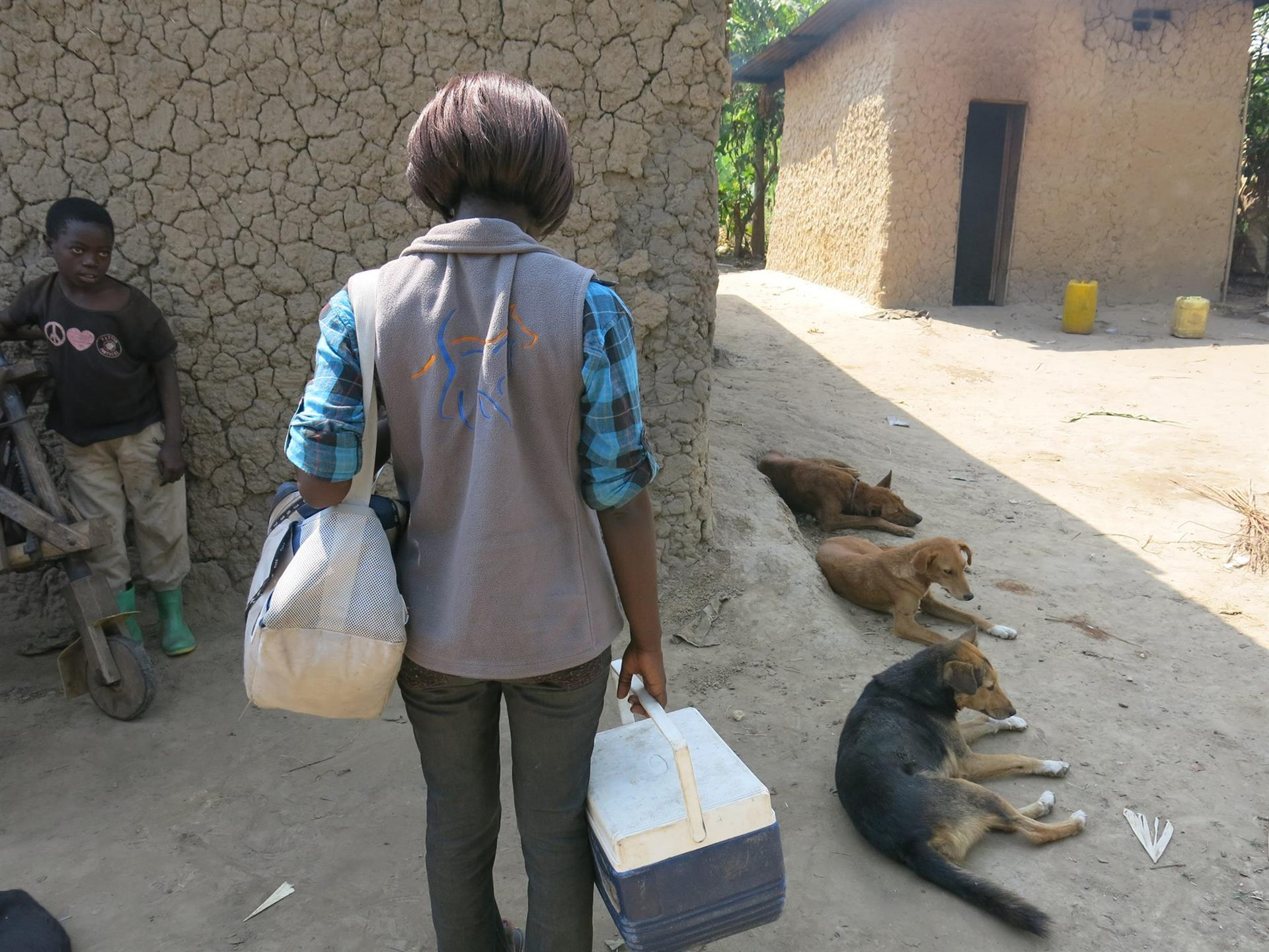 Rabies vaccination campaigns