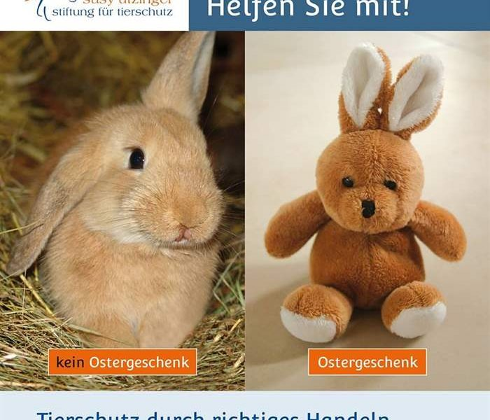 Living rabbits are not Easter presents!