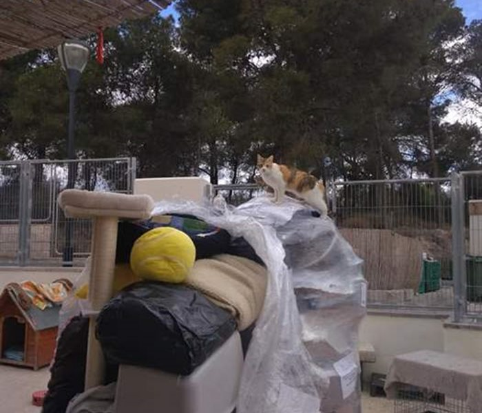 Your donations are well being received: Delivery of animal utensils to Spain