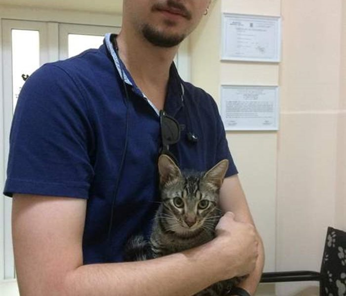 Daily work at the SUST Animal Orphan Hospital Bucharest
