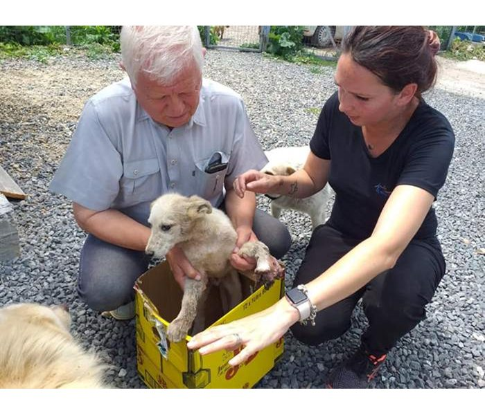 Almost every day, orphans in need of help arrive at our SUST animal orphan hospital in Galati, Romania.