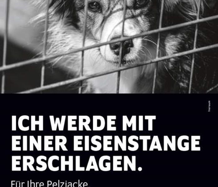 Stop Fur! Demonstration 2019