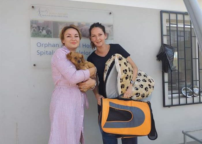 New case at the SUST Animal Orphans Hospital Galati