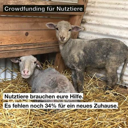 Crowdfunding for farm animals