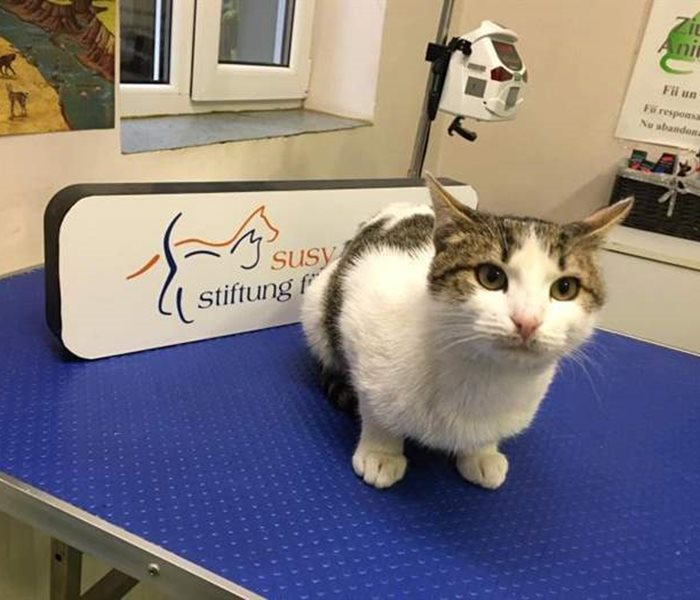Winky is a young tomcat and the newest case at SUST OAH Bucharest