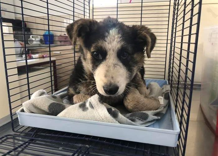This young male puppy has been abandoned in the wrong place