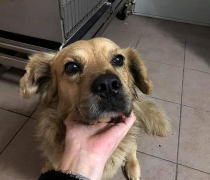 Happy ending for this short-legged old buddy