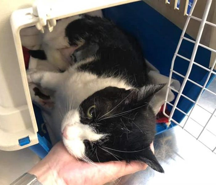 Street cat rescued by guardian angel