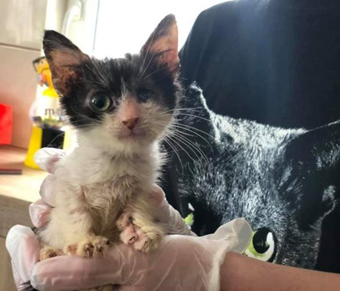 Before and after kittens at the SUST-Animal Orphans Hospital Galati