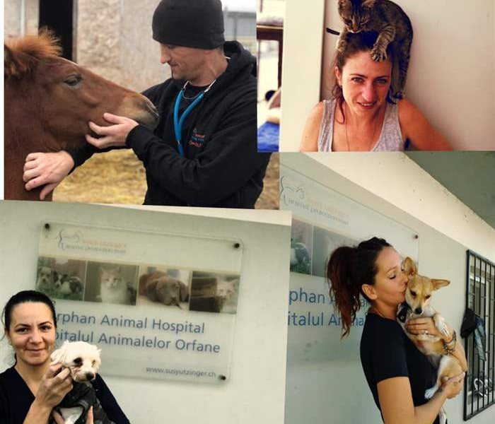 Happy New Year from the SUST Animal Orphans Hospital in Galati, Romania