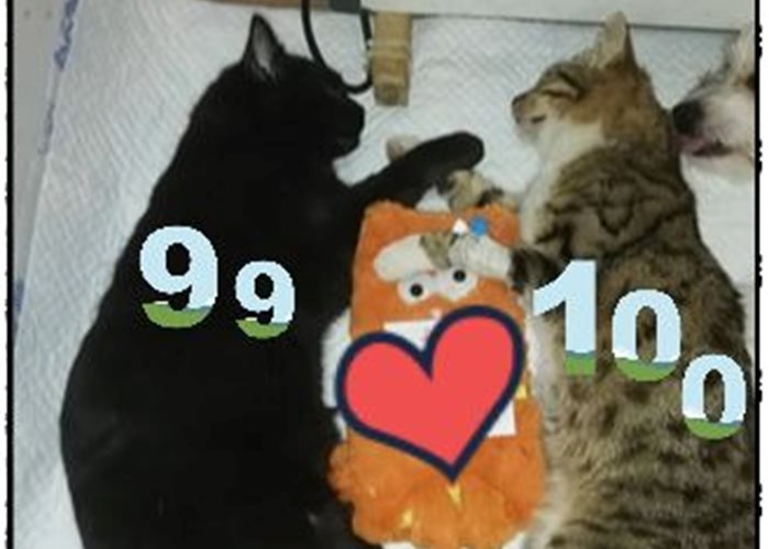 We celebrate the first 100 free neutered cats in Moreni!