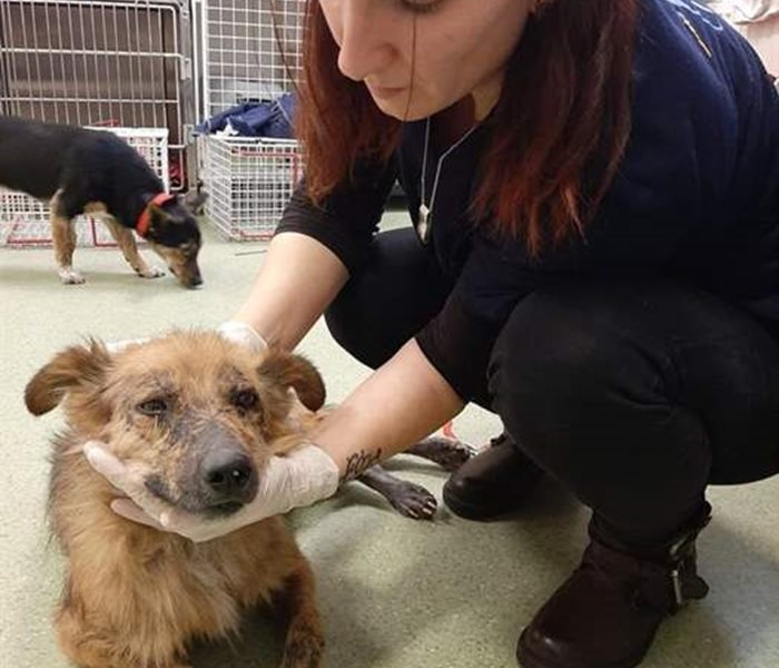 Taz receives help at the SUST Animal Orphans Hospital Bucharest
