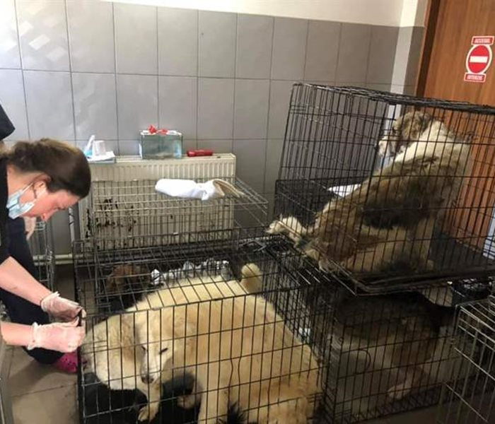 The Susy Utzinger Foundation helps the dogs in the public shelter Ecosal in Galati, Romania