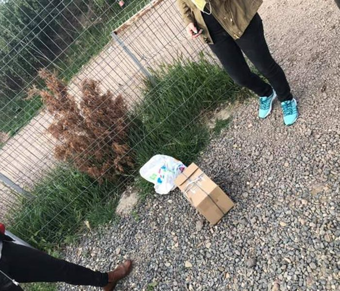A package that moves, for the SUST animal orphan hospital team in Galati, Romania