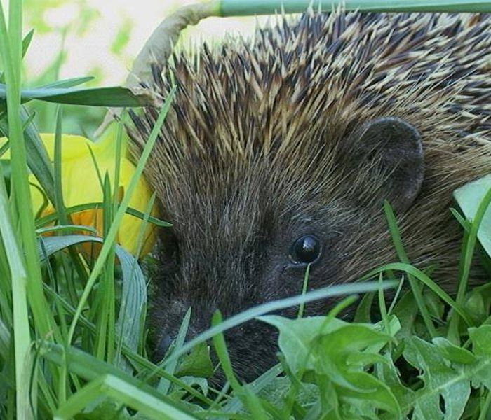 Support of hedgehog stations