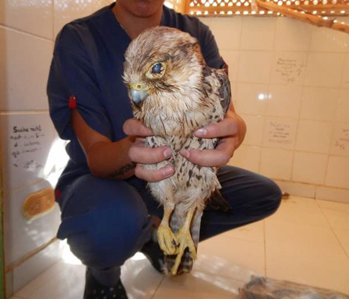 A sad story from the SUST Orphan Animal Hospital Hurghada, Egpyt
