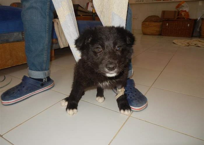 Miro: Soon back on four legs again thanks to the SUST Animal Orphan Hospital in Hurghada