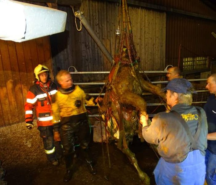 "The Susy Utzinger Animal Welfare Foundation finances the campaign ""Livestock deserve professional rescue too"" of the GTRD (Large Animal Rescue Service)"
