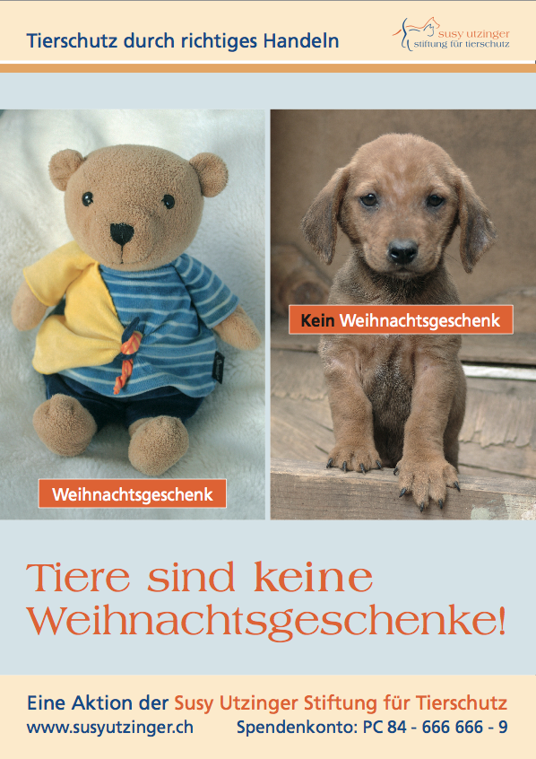 Poster: Tiere sind keine Weihnachtsgeschenke