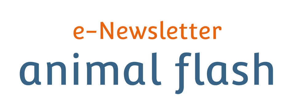 e-Newsletter Animal Flash